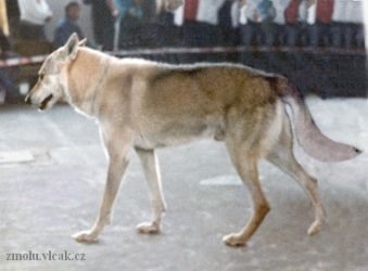 Rep PS - World Dog Show Brno - 1990