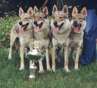 ch. en grupp Molu Es - Go - Go, Fatima, grå Wolf och Wolf Honey